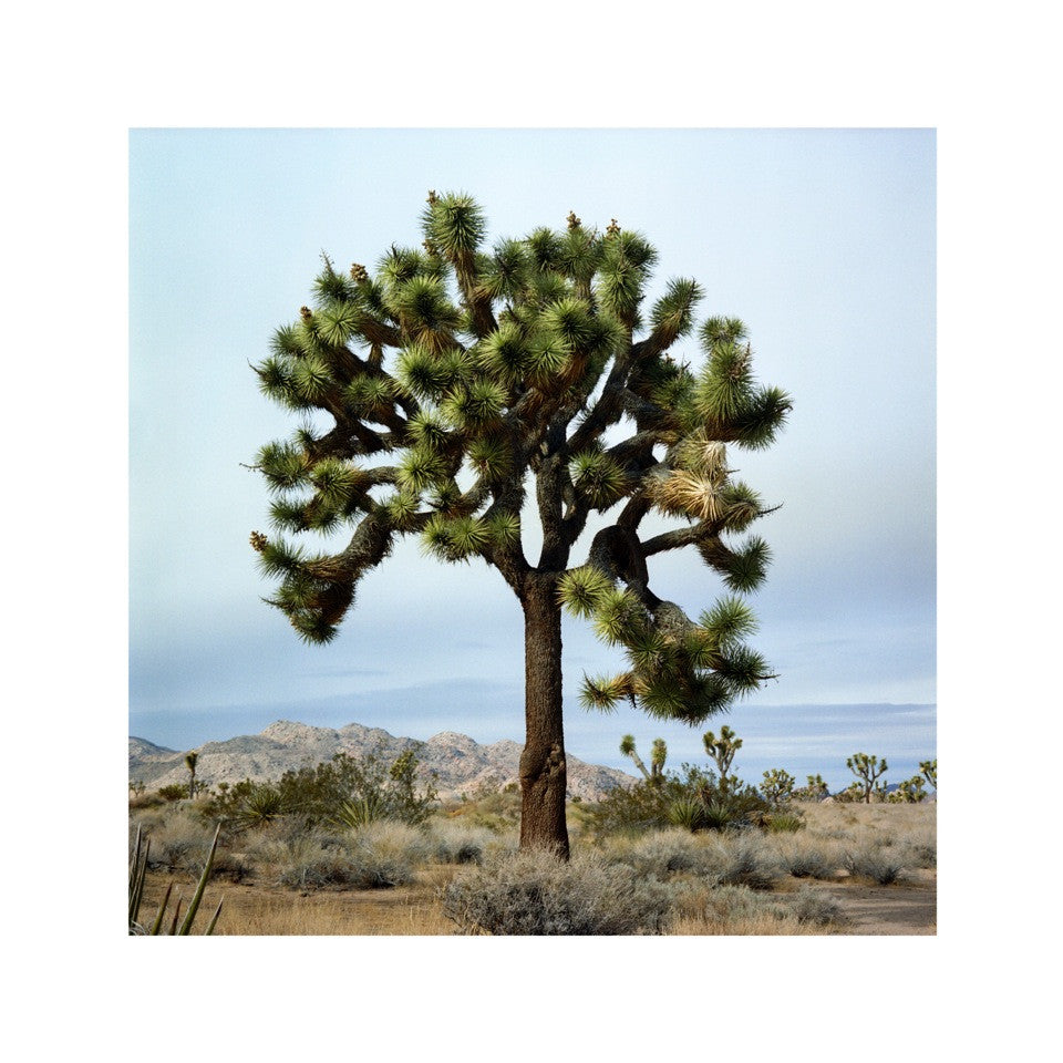 Anita Beaney 'Joshua Tree' Photographic Print