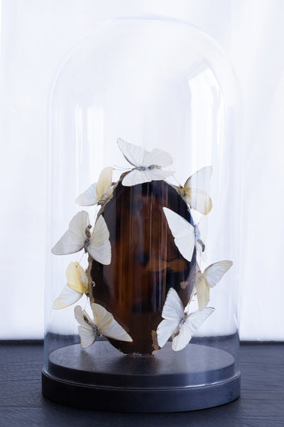 Butterfly Entomology Glass Dome by Violet Eyes Entomology - VE08 - Stranger.Things.Emporium, Entomology