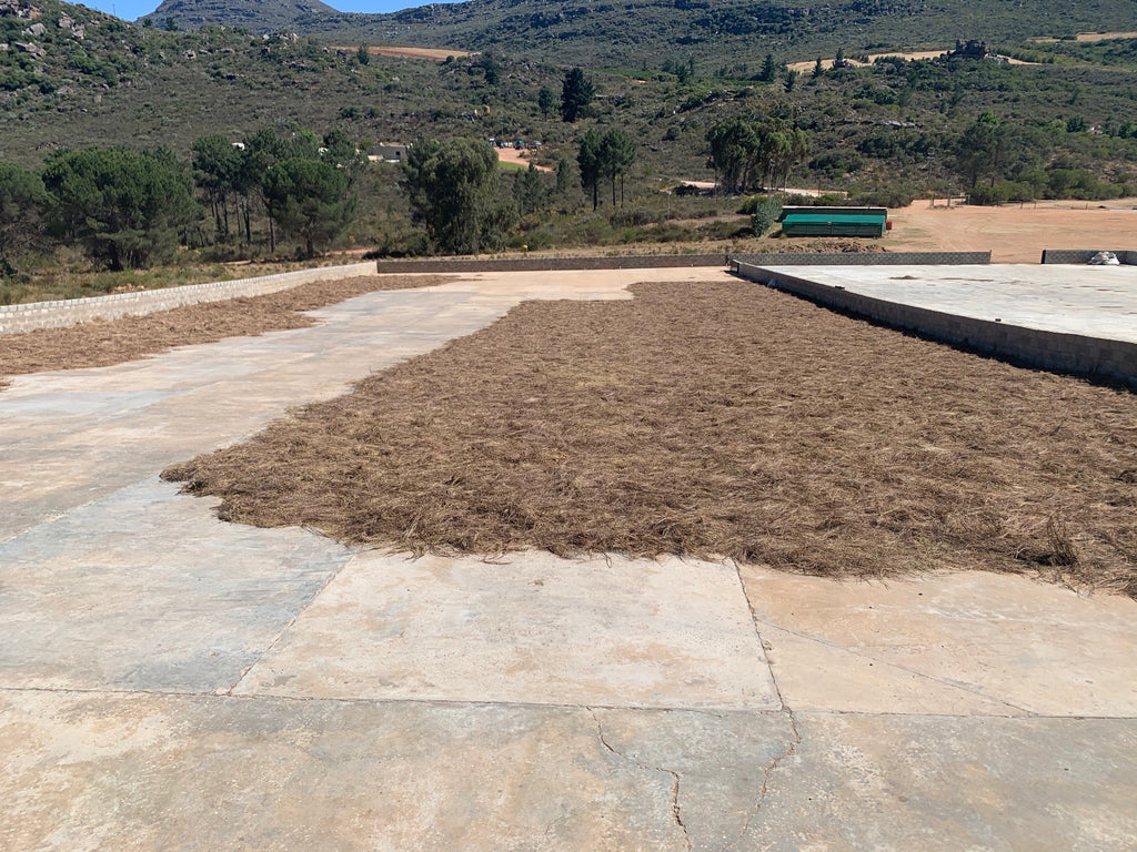 Drying Plane for Rooibos
