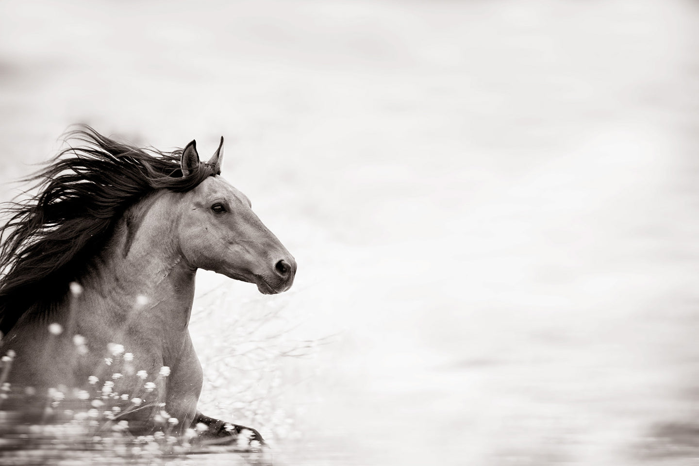 Wild at Heart, Sulpher Springs Stallion, 2010
