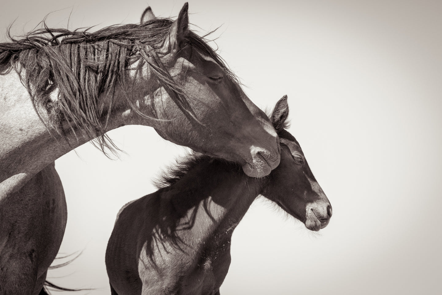 A Mother's Love, Utah Mare & Foal, 2017