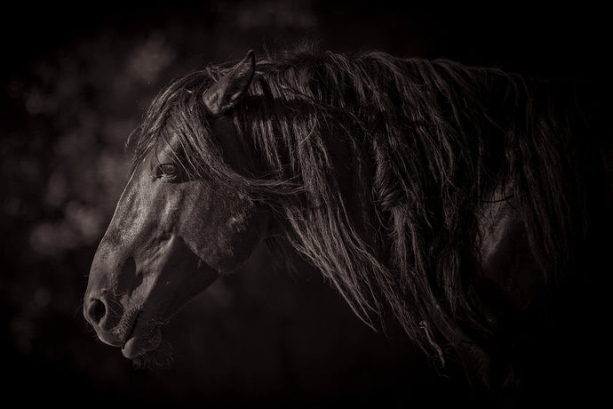 Pensive, Calico Mountains Stallion