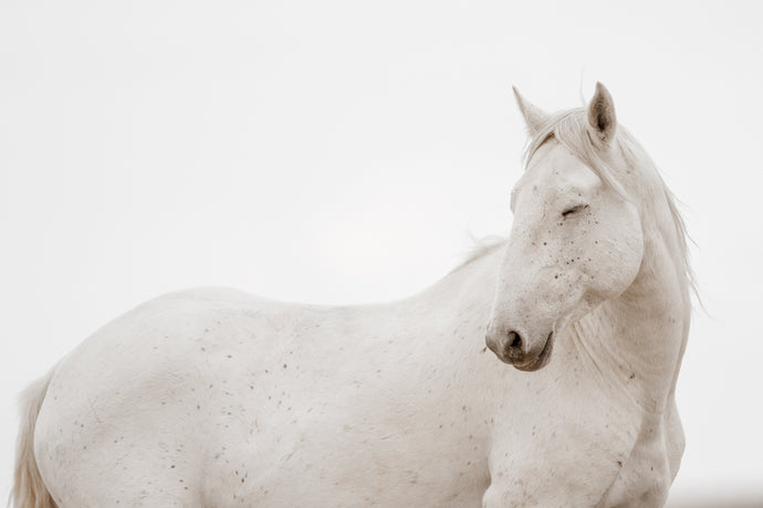 Unicorn, Salt Wells, WY, 2013