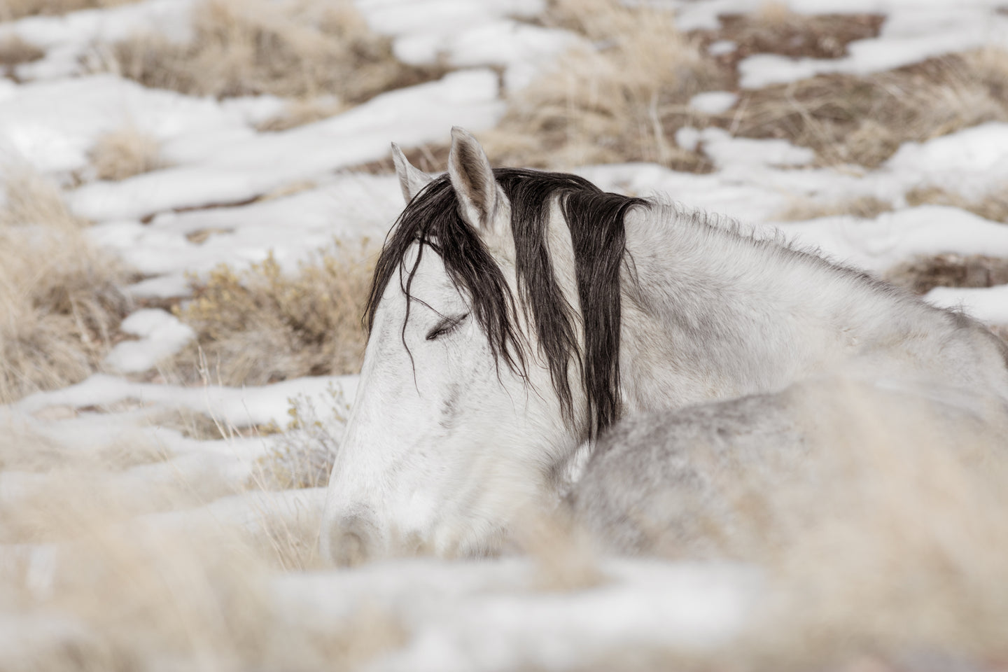 A Warm Blanket of Snow, Utah Mare, 2019