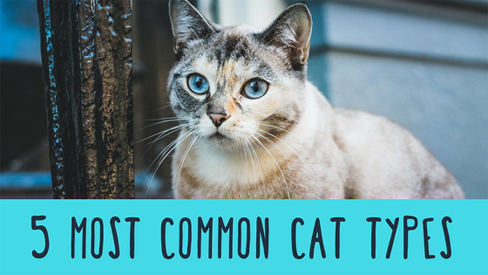 5 Most Common Cat Types