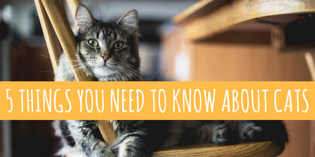 5 Things You Need To Know About Your Cat