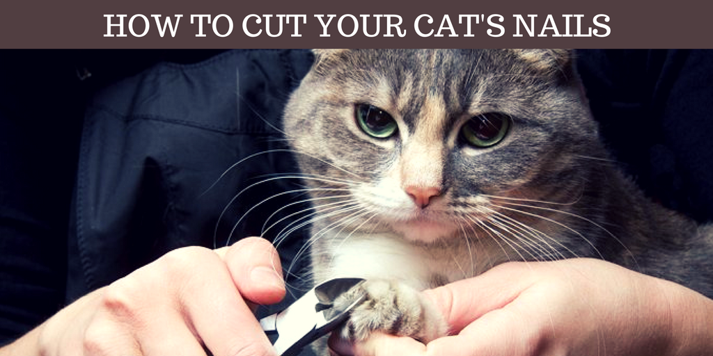 How To Cut Your Cat's Nails