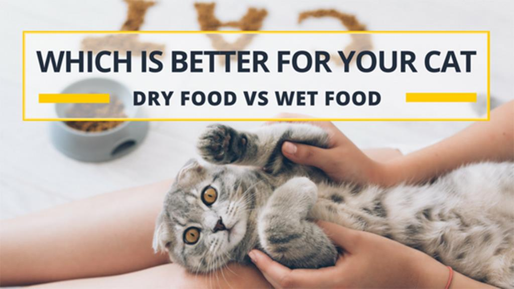 Which Is Better For Your Cat