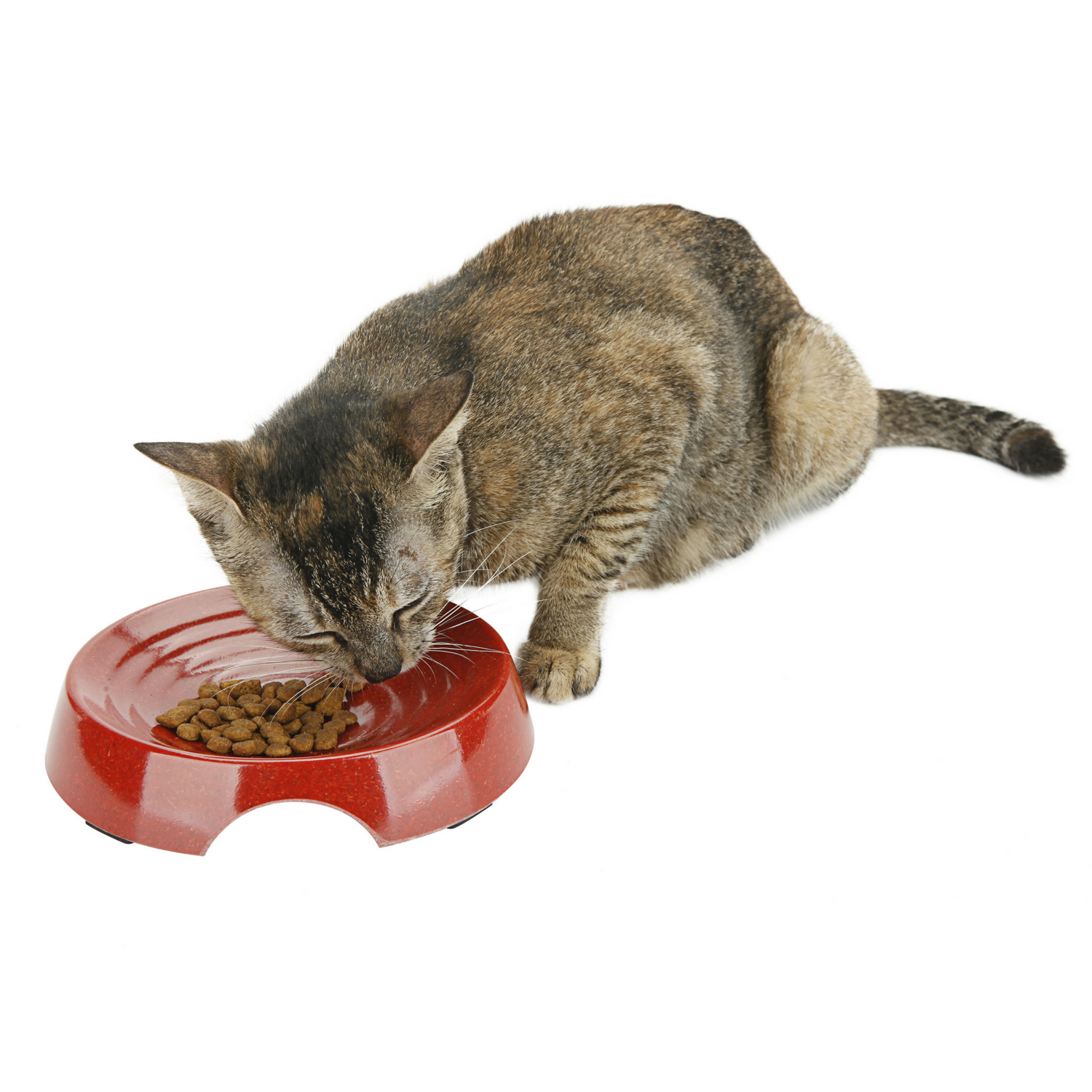 Eco Friendly Cat Bowl {Red}