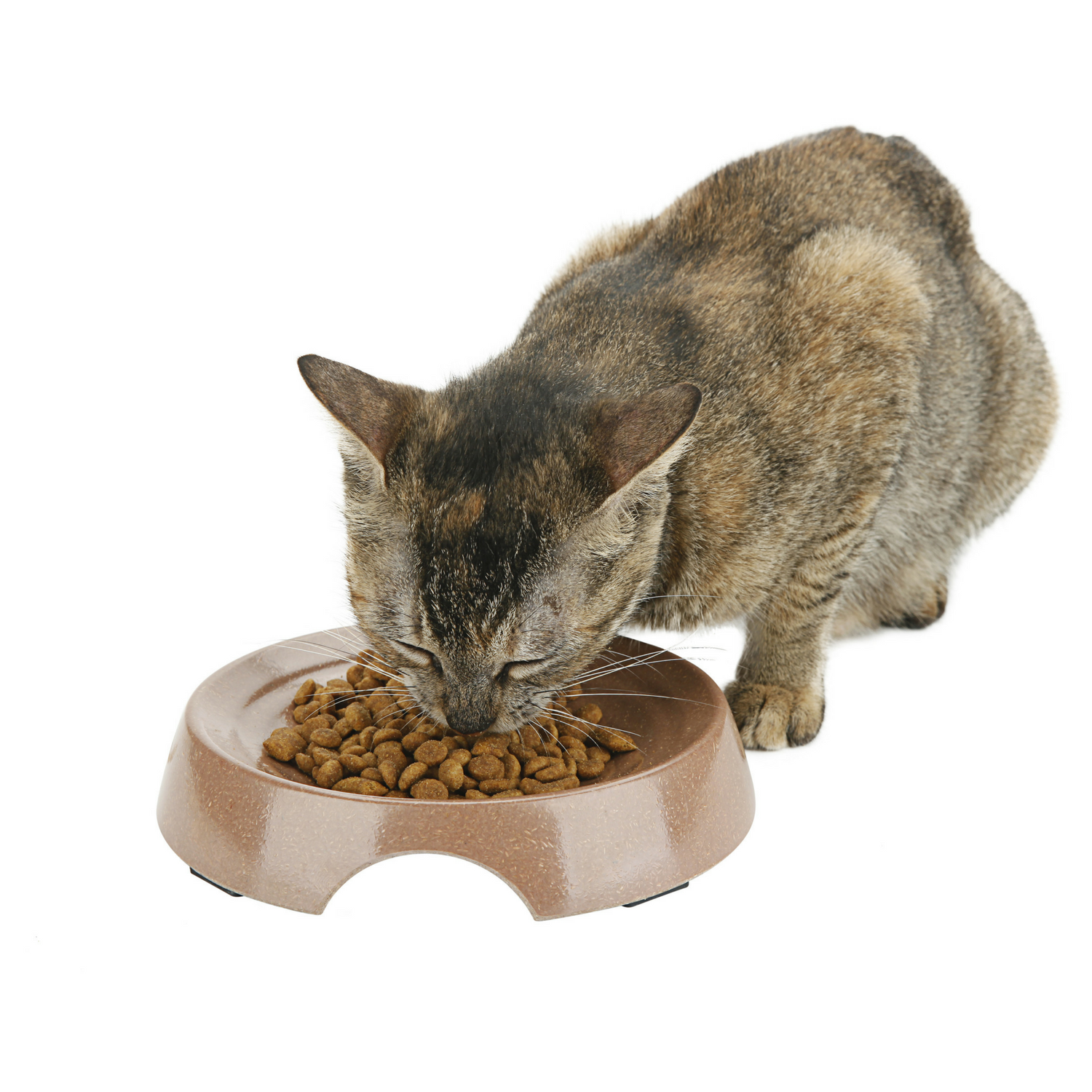 Eco Friendly Cat Bowl {Salmon}