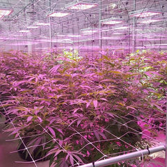 Commercial Indoor Growing Facility, Pueblo, CO.  Full facility automation and integration provided by Diganet.