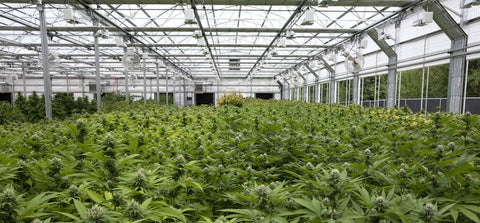Diganet is the leader in Special Systems Technology for the Cannabis Grow Facility Industry
