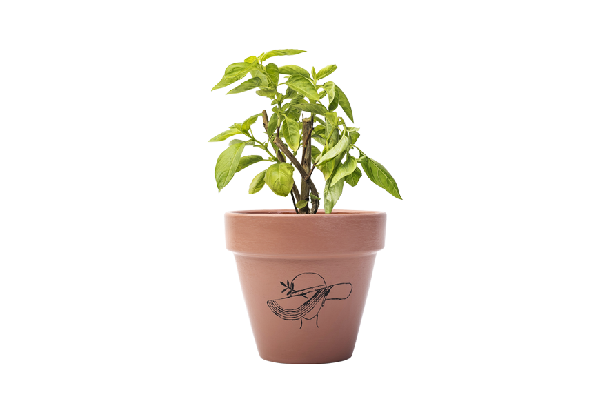 Basil - Handpainted Terracotta Pot - Outdoor/Indoor Plant