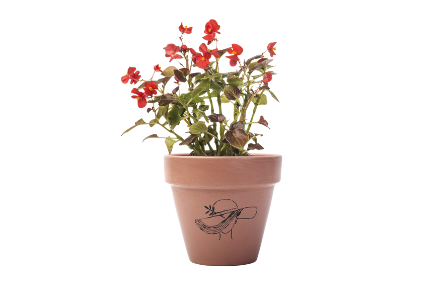 Begonia - Handpainted Terracotta Pot - Outdoor/Indoor Plant