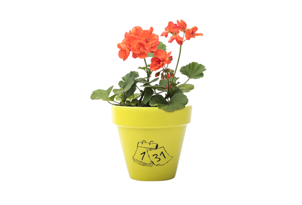 Geranium - Handpainted Terracotta Pot - Outdoor Plant