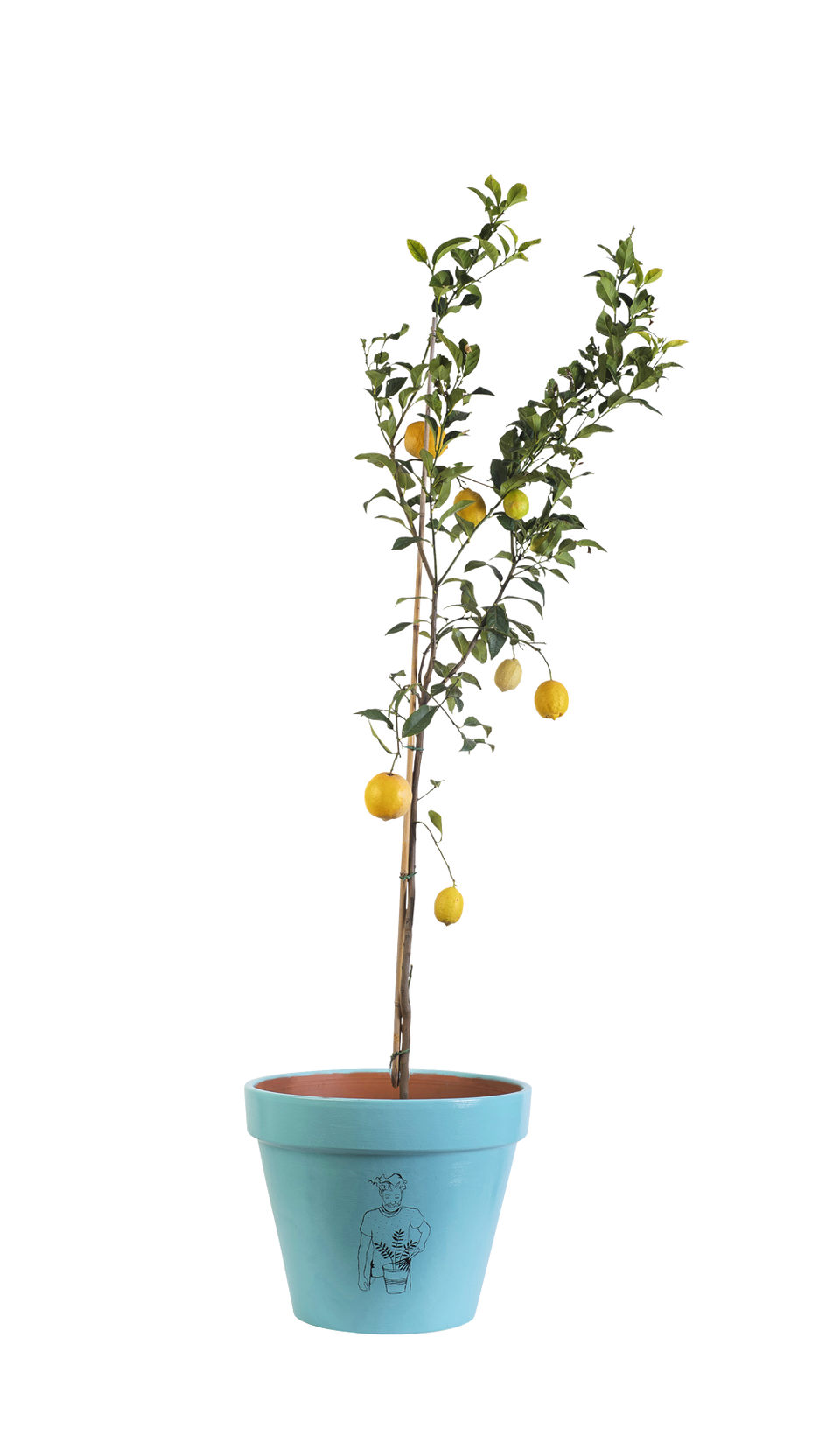 Lemon Tree - Handpainted Terracotta Pot - Outdoor Plant