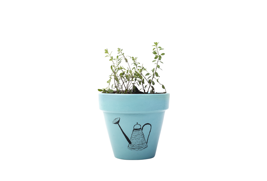 Marjoram - Handpainted Terracotta Pot - Outdoor/Indoor Plant