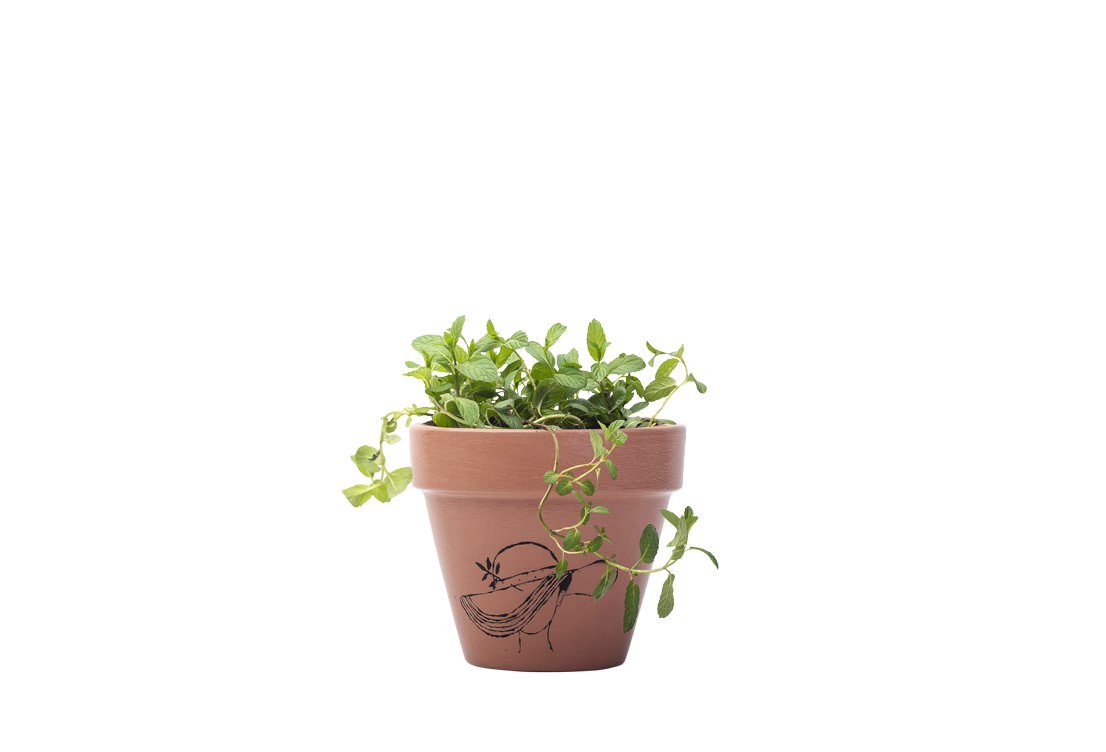 Mint - Handpainted Terracotta Pot - Outdoor/Indoor Plant