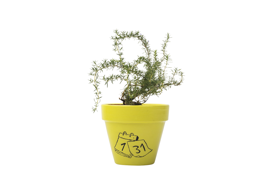 Rosemary - Handpainted Terracotta Pot - Outdoor Plant