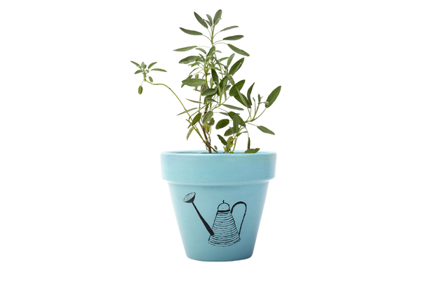 Sage - Handpainted Terracotta Pot - Outdoor Plant