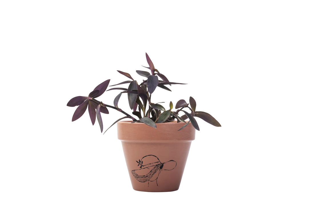Setcreasea - Handpainted Terracotta Pot - Outdoor Plant