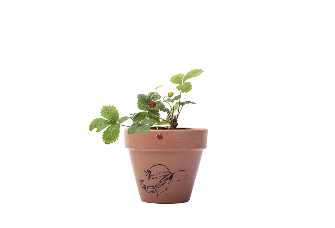 Wild Strawberries - Handpainted Terracotta Pot - Outdoor Plant