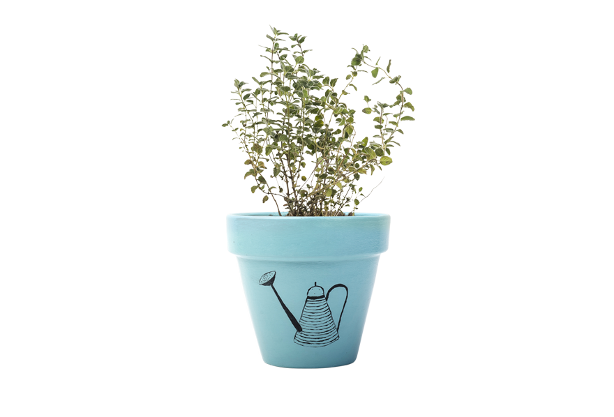 Wild Thyme - Handpainted Terracotta Pot - Outdoor Plant