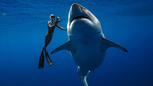 Why we love Ocean Ramsey