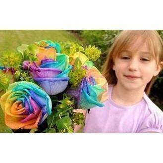 MAGIC RAINBOW ROSE FLOWER SEEDS
