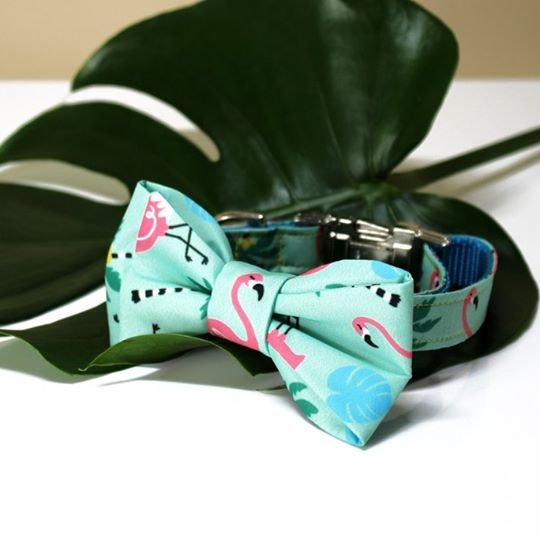 The Kayla [ Mint ] Bow Tie with Matching Collar