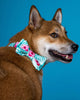 The Isla Bow Tie with Matching Collar - FURRPLAY