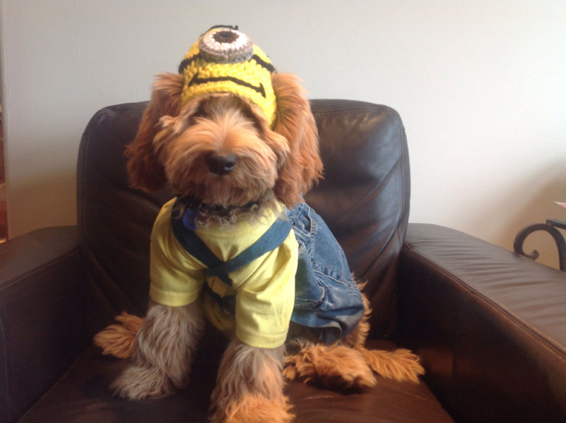 Labradoodle Halloween Costumes