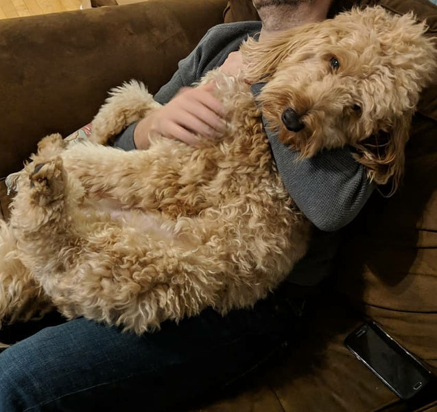 Top 10 signs you are a Doodle Dad!