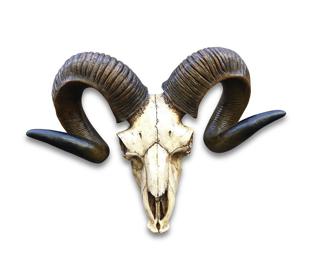 Bighorn Resin Ram/Animal Skull (Original)