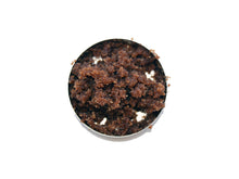 Cinnamon Drops - Lip Scrub