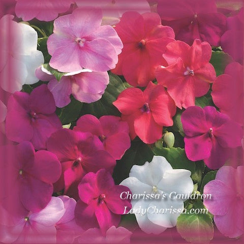 Impatiens Flower Remedy