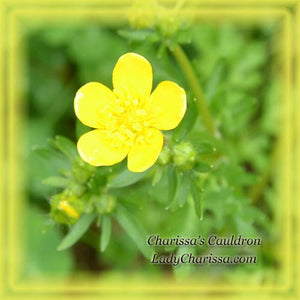 Bulbous Buttercup Flower Remedy