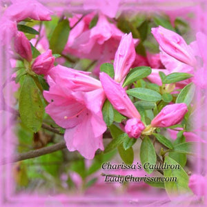Pink Azalea Flower Remedy