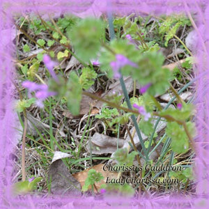 Henbit Flower Remedy