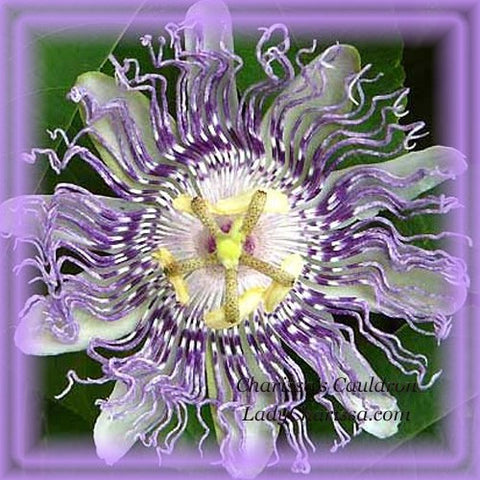 Passion Flower Remedy