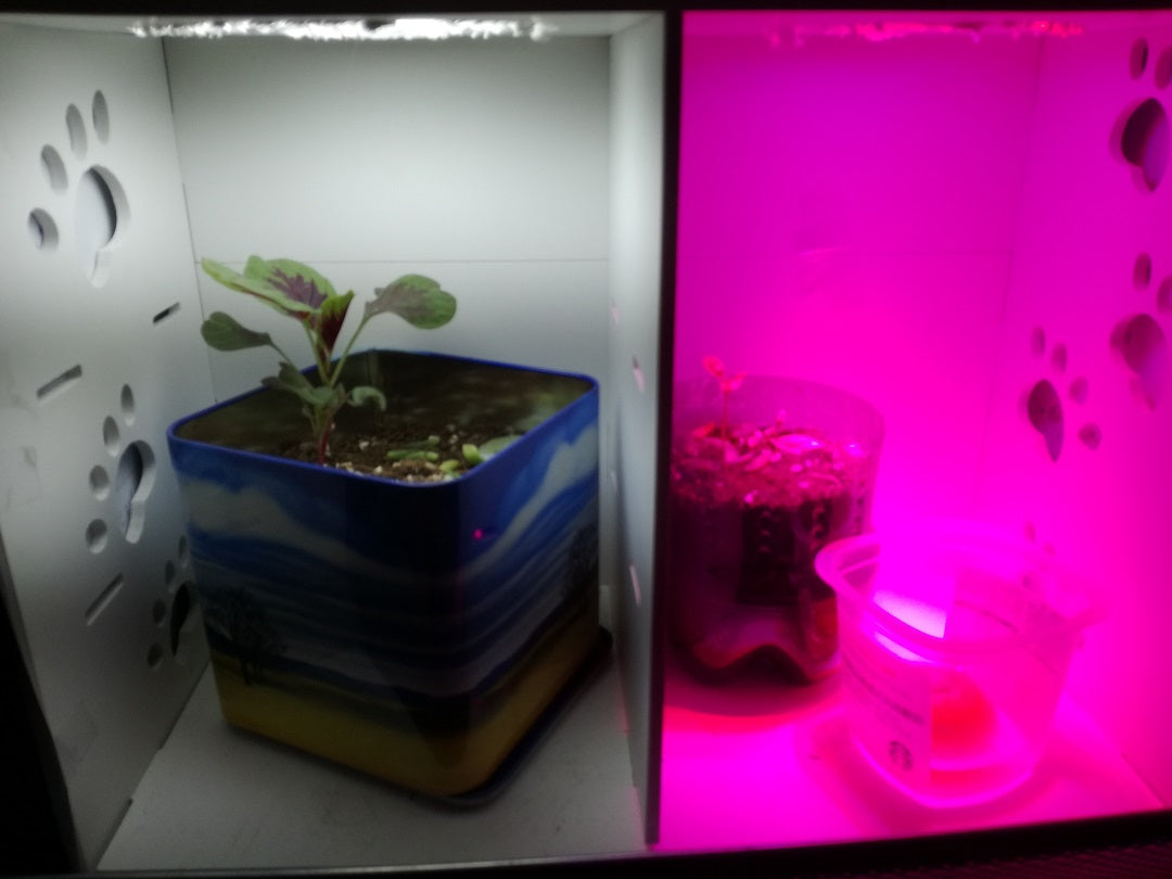 led-grow-light-test