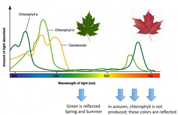 Photosynthesis-blue-red-light-spectrum