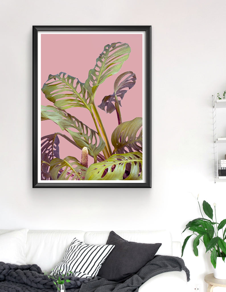 Monstera adansonii art print - Wallzilladesign