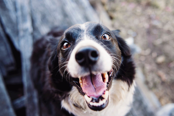 When you get home, does your dog greet you with plenty of eye contact? That means they love you!