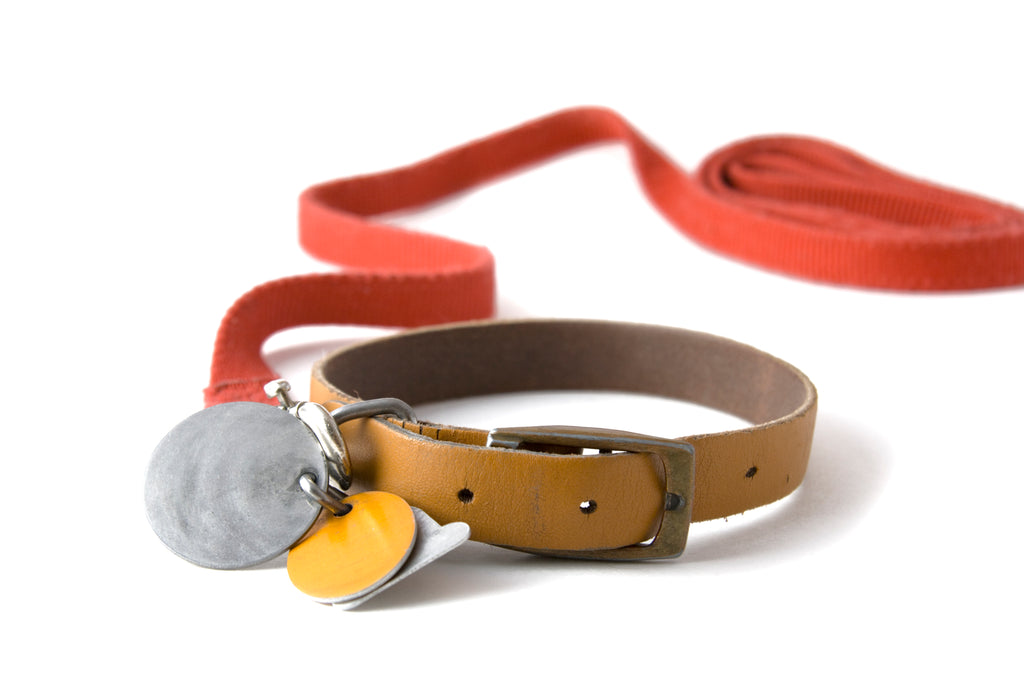 Your dog's tags can make a great keychain.
