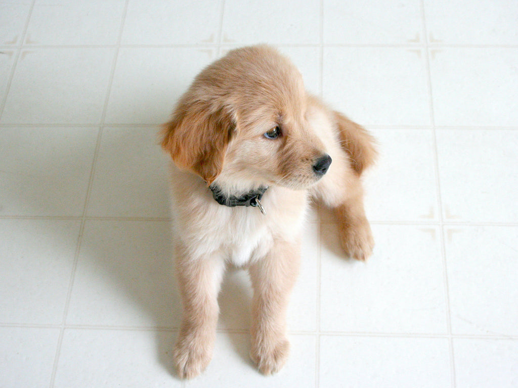 The best puppy food contains wholesome, balanced nutrients.