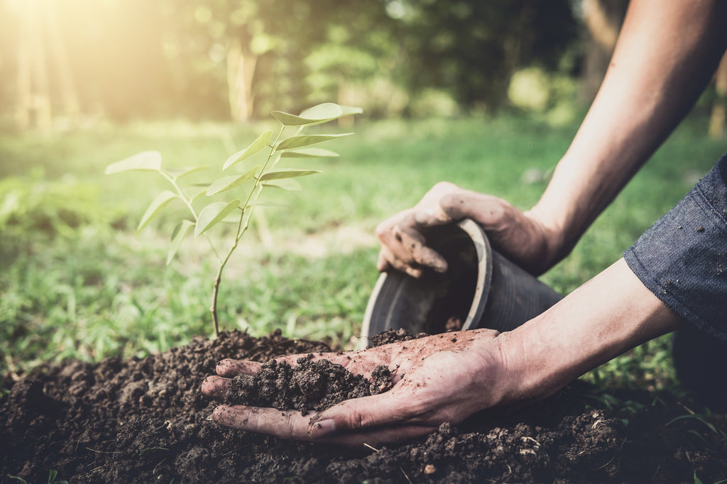 Plant a tree with your dog's ashes to keep them alive in your heart.