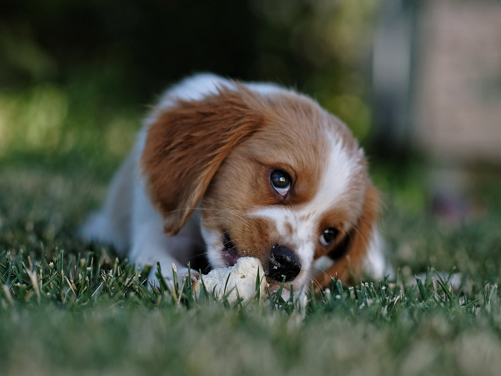 Did you know puppies eat more food (relative to their body weight) than adult dogs?