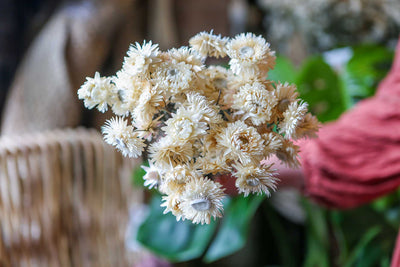 5 Ways to Display Dried Flowers