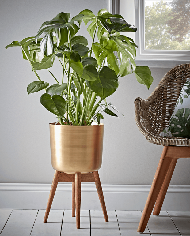 Brass Planter on Wooden Stand